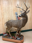 Lifesize Whitetail Deer with custom base/habitat - Taxidermy mounts for African/Exotic animals, unique, custom poses.
